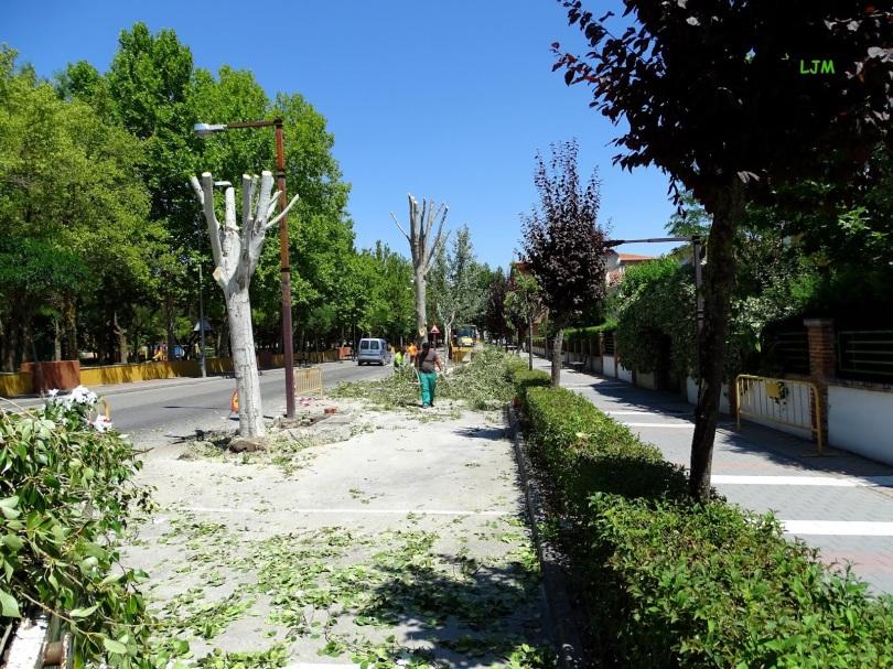 _Paseo de la AlamedaDSC00712 B V-19