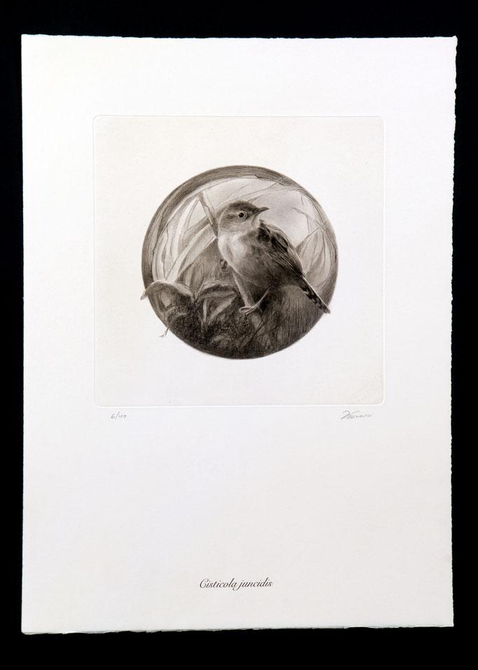 image grabado ave